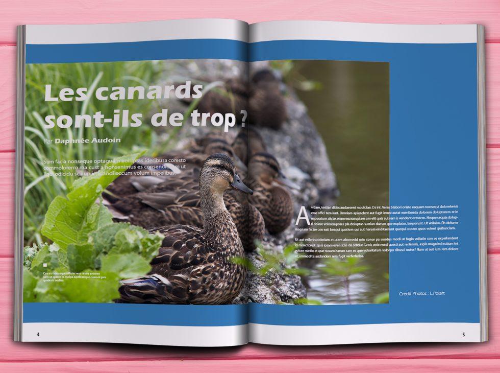 print, journal municipal, pao
